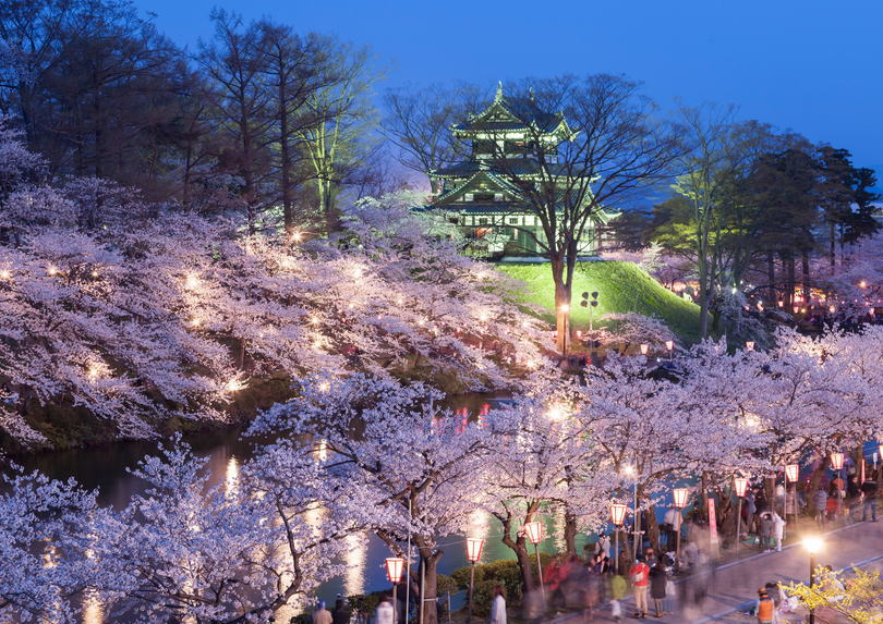 Hanami (cherry blossom viewing) Party in Japan